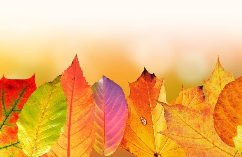 Novinky vo FLOWii + Jesenná AKCIA